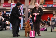 Ploon Best Puppy Winner Amsterdam 2010